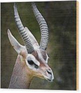The Gerenuk Wood Print