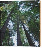 The Giant Redwoods I Wood Print