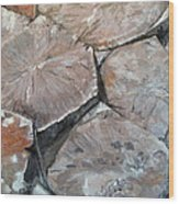 The Giant's Causeway Wood Print