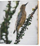 The Gila  Woodpecker Wood Print