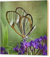 The Glasswing  Wood Print