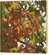 The Glory Of Autumn Wood Print