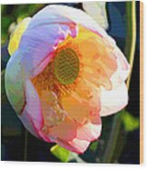 The Glow of the Lotus Wood Print