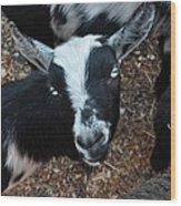 The Goat With The Gorgeous Eyes Wood Print