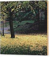 The Golden Gingko Path Wood Print