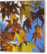 The Golden Hues Of Autumn  Wood Print