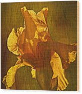 The Golden Iris Wood Print