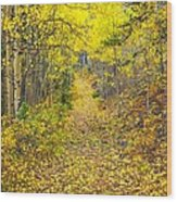 The Golden Path Wood Print
