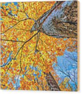 The Gorgeous Fall Wood Print