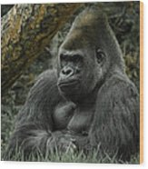 The Gorilla 3 Wood Print
