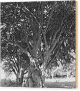 The Grandmother Tree Wood Print