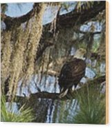 The Great Bald Eagle  Wood Print