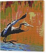 The Great Blue Heron Jumps To Flight Wood Print