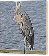 The Great Blue Heron Photo Wood Print