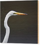 The Great Egret Head Shot Wood Print