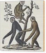 The Great Gibbon Wood Print