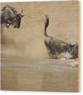 The Great Migration Wildebeest Crossing Wood Print