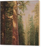 The Great Trees Mariposa Grove California Wood Print