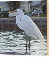 The Great White Egret Wood Print