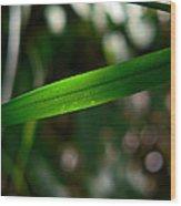 The Green Blade Wood Print