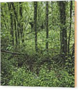 The Green Forest Wood Print