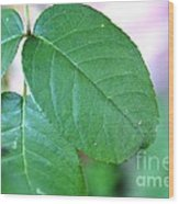 The Green Leaf Wood Print
