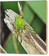 The Green Spider Wood Print