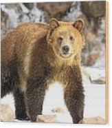 The Grizzly Strut Wood Print