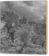 The Grouped Cottonwoods  Wood Print