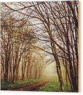 The Guiding Light Wood Print