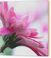 The Happy Flower Pink Daisy Wood Print