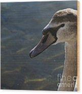 The Haughty Goose  Wood Print