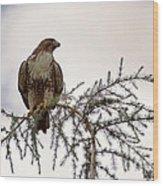 The Hawk Wood Print