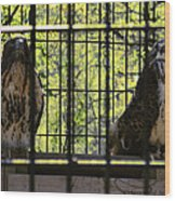 The Hawks From The Series The Imprint Of Man In Nature Wood Print