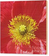 The Heart Of A Red Poppy Wood Print