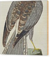 Hen Harrier Wood Print