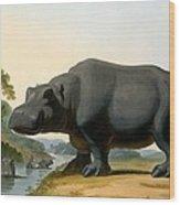 The Hippopotamus, 1804 Wood Print