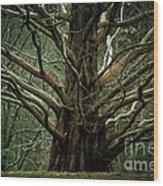 The Hobbit Tree Wood Print