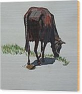 The Holy Cow And Dung. Wood Print