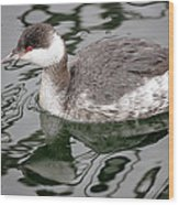 The Horned Grebe Wood Print