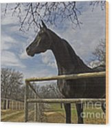 The Horse Trainer Wood Print