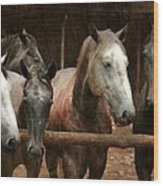 The Horses Wood Print