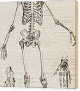 The Human Skeleton Wood Print