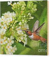 The Hummer And The Butterfly Bush Wood Print