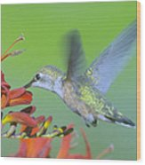 The Humming Bird Sips  Wood Print by Jeff Swan
