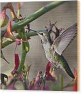 The Hummingbird And The Slipper Plant  Wood Print
