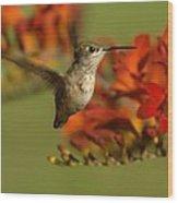 The Hummingbird Turns   Wood Print