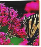 The Hungry Butterfly Wood Print