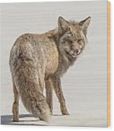The Hungry Fox Wood Print