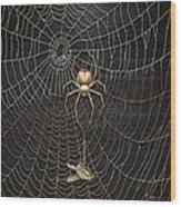 The Hunter And Its Pray - A Gold Fly Caught By A Gold Spider Wood Print